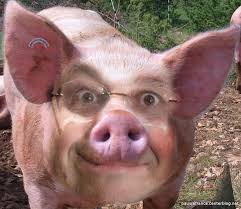 holl cochon